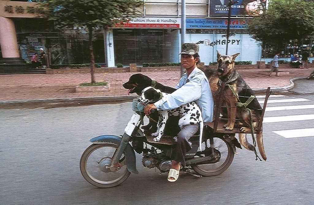 mandiwthdog